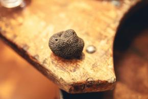 Truffe noire de la marque Pays Cathare