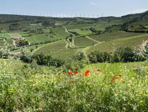 vue sur des champs avec des eoliennes en arrière plan