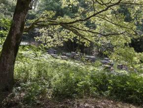 des ruches au milieu des arbres