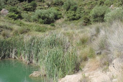 zone humine sentier du PLA Fitou