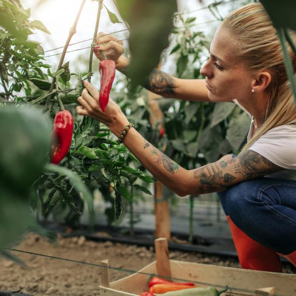 Cueilleuse de fruits et légumes en tant qu'employée saisonnière