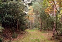 La forêt des Plos